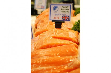 Salmon Fillets1