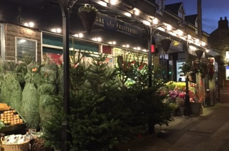 Christmas trees in Harrogate